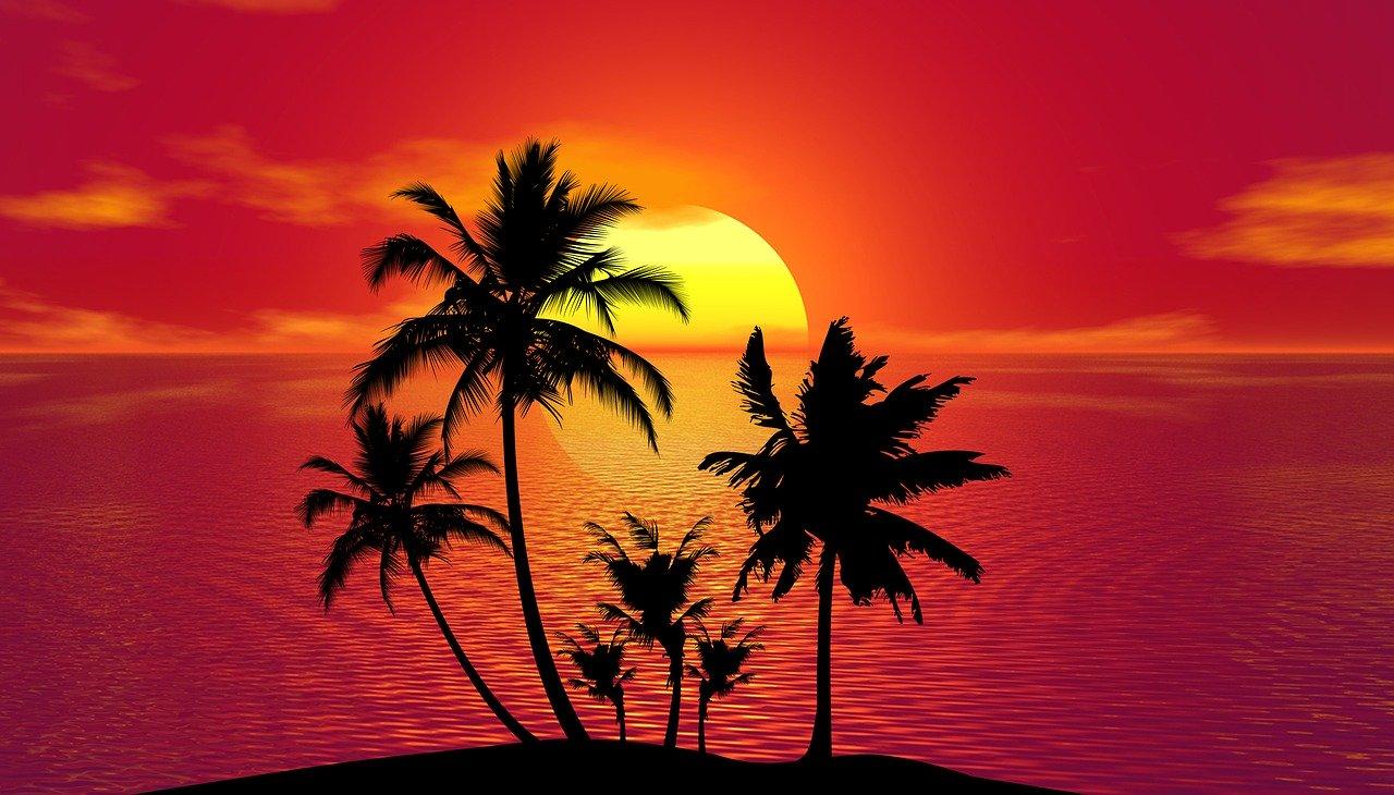 tropical, summer, sunset